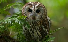 Картинка лес, природа, сова, птица