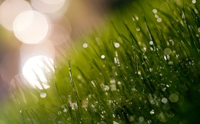 Картинка зелень, трава, свет, свежесть, роса, блики, утро, луг, травинки, сочно, тени.