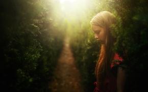 Картинка девочка, аллея, Dreams, елочки, иголочки, TJ Drysdale