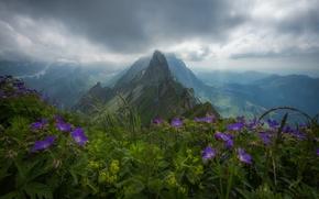 Картинка цветы, горы, Швейцария, Альпы, вершина, панорама, Switzerland, Alps, Аппенцелльские Альпы, Appenzell Alps, хребет Альпштейн, Alpstein …