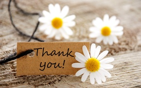 Обои card, flowers, daisies, thank you, карта, цветы