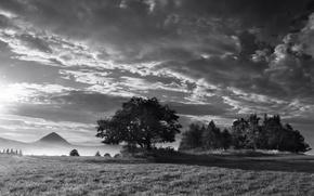 Обои туман, дерево, Черно-белая