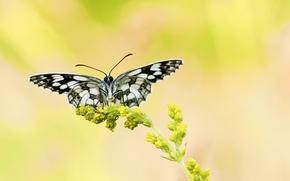 Обои чернобелая, фон, бабочка, желтый, растение, цветок