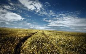 Обои лето, дорога, небо, поле