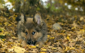 Картинка собака, друг, природа
