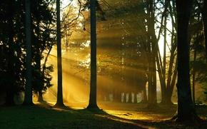 Обои солнечный свет, природа, деревья, ветки, лес, стволы