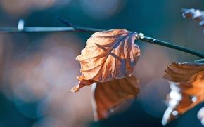 Картинка листья, макро, ветки