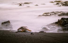 Картинка море, берег, черепаха