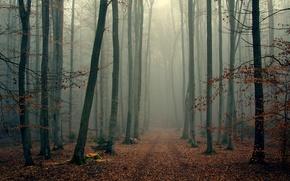 Картинка осень, лес, деревья, ветки, туман, листва, wood, foggy