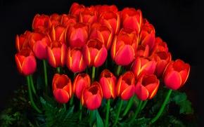 Обои свет, фон, лепестки, сад, тюльпаны