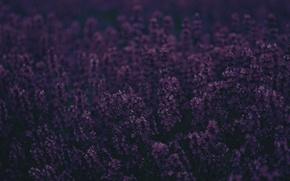 Картинка фиолетовый, цветы, фон