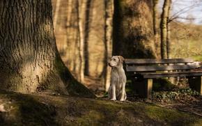 Картинка взгляд, друг, дерево, собака, скамья