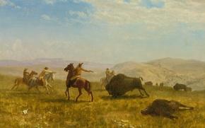Картинка картина, охота, ковбой, Дикий Запад, бизон, Альберт Бирштадт