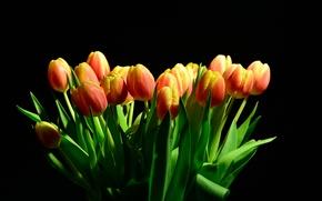 Картинка свет, фон, тюльпаны, Black, background, Tulips