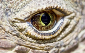 Обои scales, komodo dragon, reptile, eye
