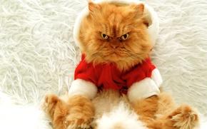 Картинка кот, большой, рыжий, Новый год, злой