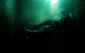 Картинка вода, водоросли, From Abyss