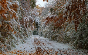 Картинка дорога, осень, листья, деревья, октябрь, первый снег