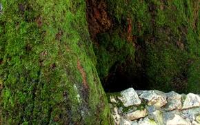Картинка камни, дерево, Мох, Логинов
