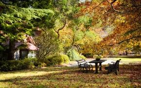 Картинка осень, деревья, парк, стол, листва, скамейки