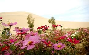 Картинка лето, природа, Цветы