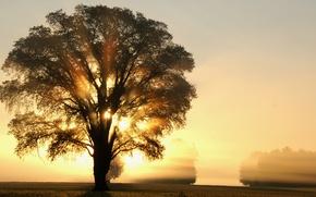 Картинка light, trees, field, tree, rays, morning, sun