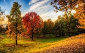 Картинка осень, лес, небо, трава, деревья, парк