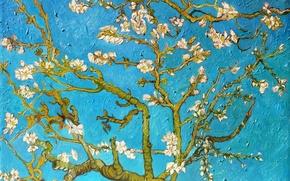 Картинка ветви, картина, живопись, blue, art, Vincent van Gogh, миндальное дерево, Almond Tree, Винсент ван Гог