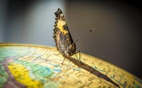 Картинка бабочка, мир, глобус