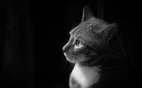 Картинка Кошка, белый, черно