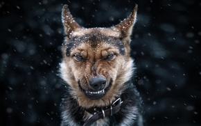 Картинка eyes, dog, face