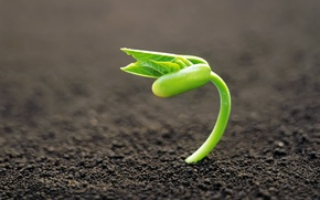 Картинка макро, фон, земля, растение, росток, фокус, зелёный