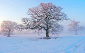 Картинка зима, иней, снег, деревья, туман, утро, мороз