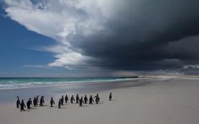 Обои море, птица, облака, пингвины, небо, пейзаж