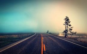Обои дорога, природа, туман, дерево