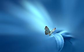 Картинка стиль, лист, Josep Sumalla, фон, бабочка, голубой, цветок