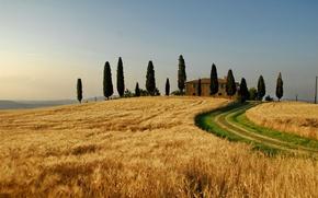 Обои поля, таскания, пейзажи, природа, дома, деревья, дерево, италия, пшеница, поле, небо, осень