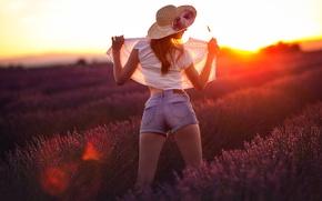 Картинка девушка, шорты, блузка, лаванда, Studio Hors-champ, lavander on sunset