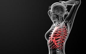 Картинка bones, ribs, human figure