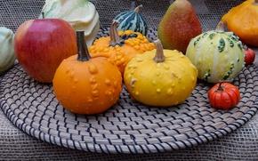 Картинка осень, widescreen, урожай, тыквы, тыква, выставка, wallpaper, широкоформатные, background, обои на рабочий стол, полноэкранные, HD …