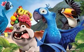 Обои собака, попугаи, rio, фрукты, рио, Мультфильм