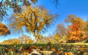 Картинка осень, небо, трава, листья, деревья