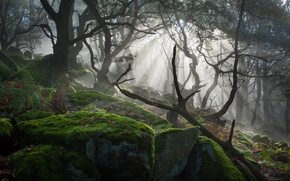 Картинка свет, деревья, камни, мох, солнечные лучи
