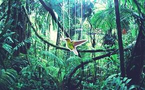 Картинка природа, фотошоп, Колибри
