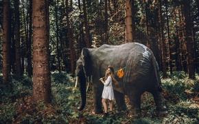 Картинка лес, девушка, слон