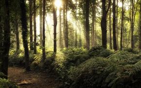 Обои лес, свет, дорога