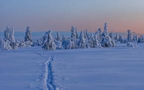 Картинка зима, снег, деревья, Швеция, тропинка, Sweden, Lapland, Лапландия, Вестерботтен, Vasterbotten, Gitsfjället