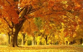 Обои красота, парк, природа, деревья, листва, пейзаж, осень, лес