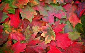 Картинка осень, листья, макро, фото
