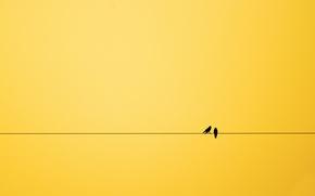 Обои птицы, фон, минимализм